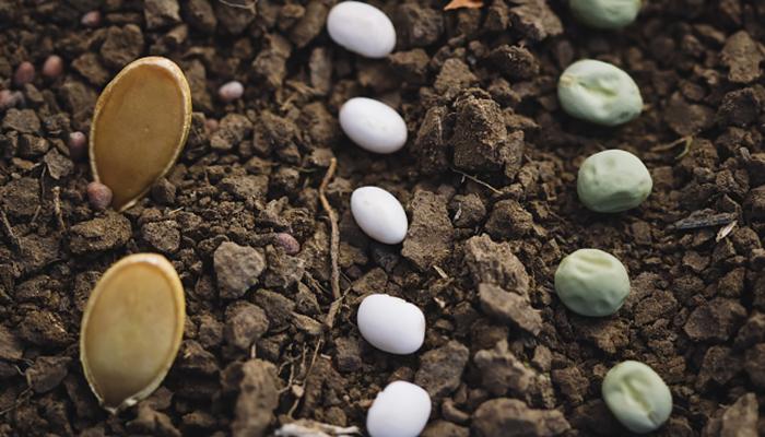 【BIメールマガジン Vol.255】日本は遺伝子組み換え食品の輸入大国