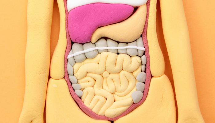 腸内環境vol.1~人間は微生物とともに生きている~
