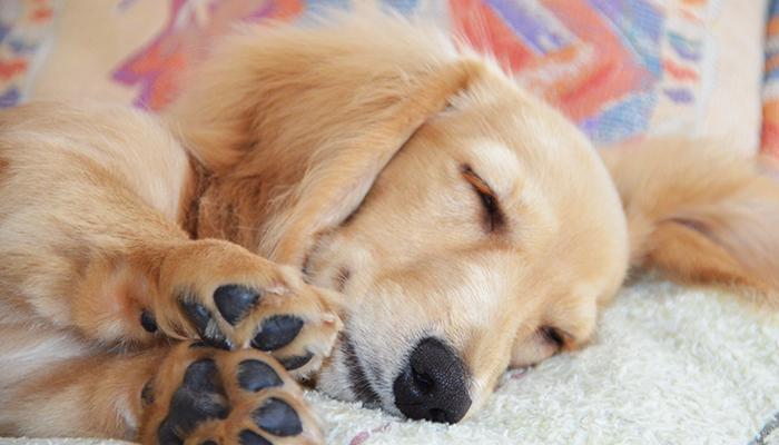 【Vol.091】ペットの病気が急増しているわけ